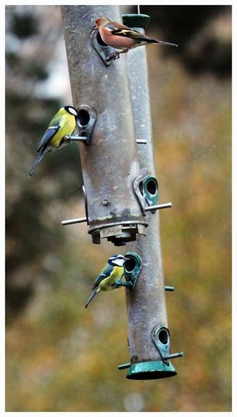 Garden birds by marathonman