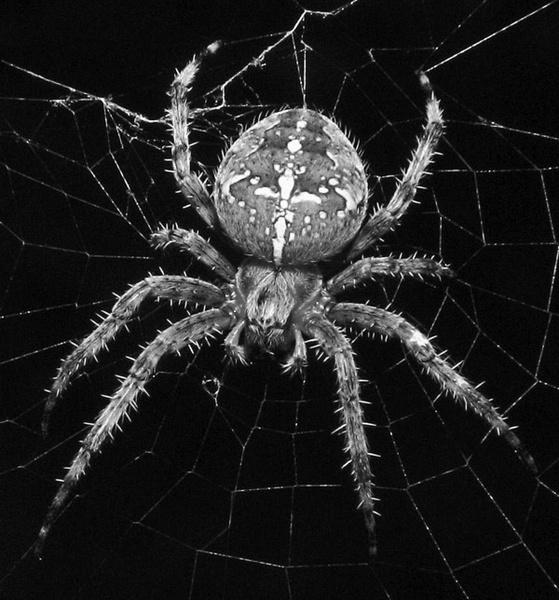 Big Spider by 64Peteschoice