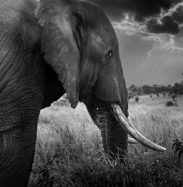 Elephant on the Ridge by JoshCunliffe