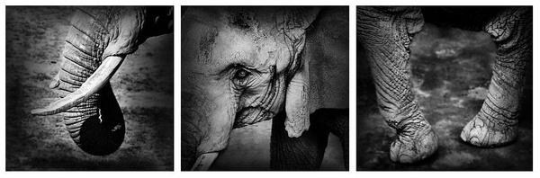 Elephant by portia27493