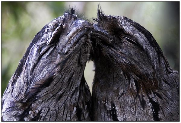 Love Birds by VonQ