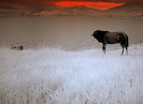 Stallion in dusk by musashi