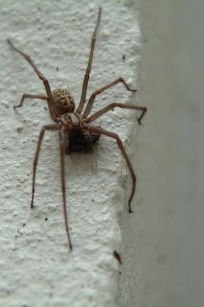 english spider with prey by kieranmccay