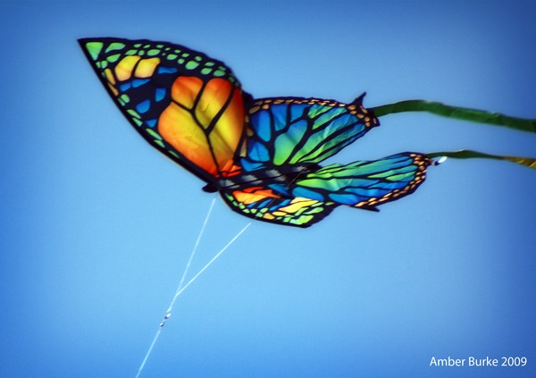 Butterfly Kite by ABurke