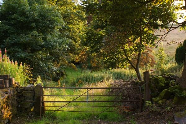Up the Garden Path by jon gopsill