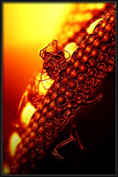 Devil\'s Reptile by Morpyre