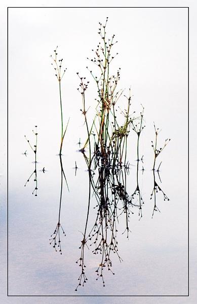 Pond Life... by MalcolmM