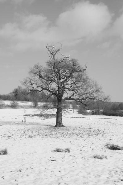 white birds in a tree in a white field by sevenmalt