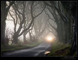 Foggy Avenue