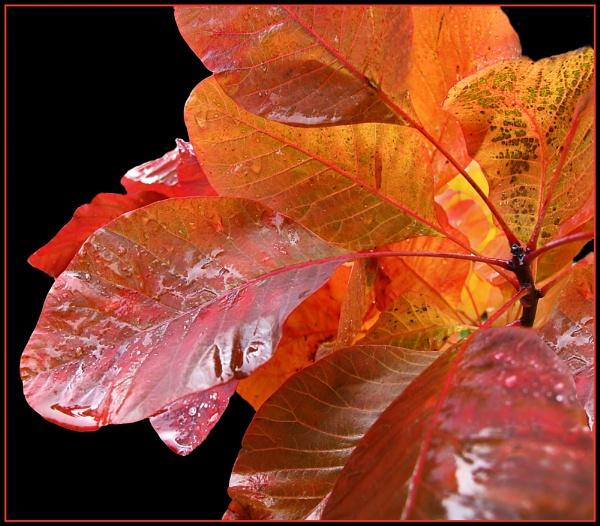 Autumn Sunshine by Sylviwhalley