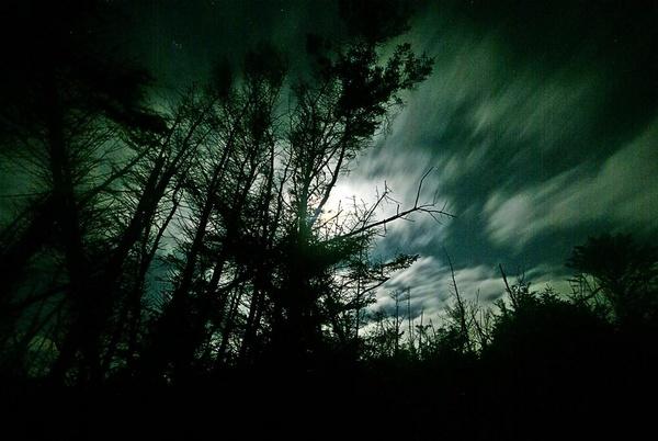 Moonlight Through Trees by gazb159