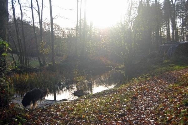 Morning Walk by Gwen_A