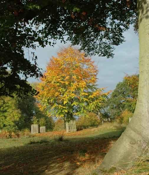 Tri-colours Tree by Birdseye