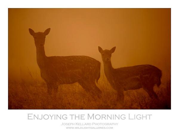 Enjoying the Morning Light by WildLight