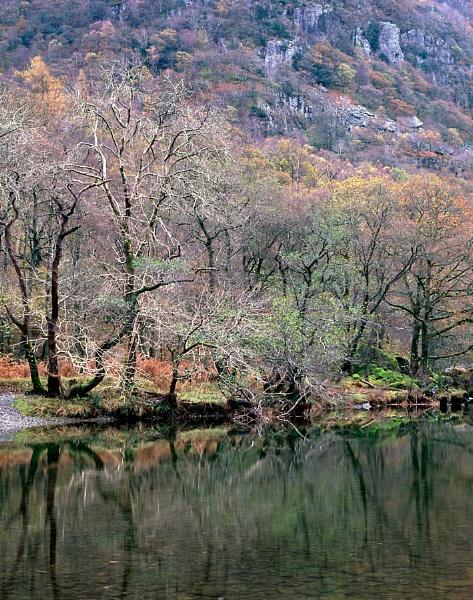 Borrowdale Autumn by fennera