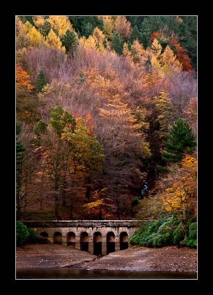 Autumn at Derwent Dams by jeni