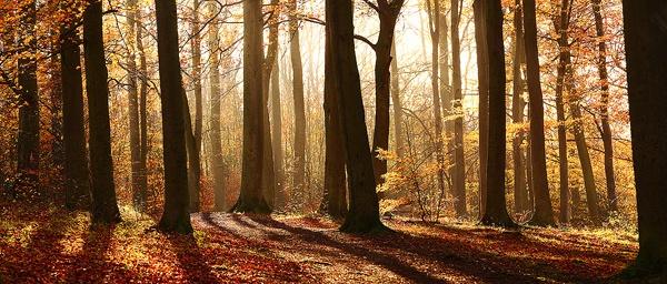 Beechwoods by JamesAppleton