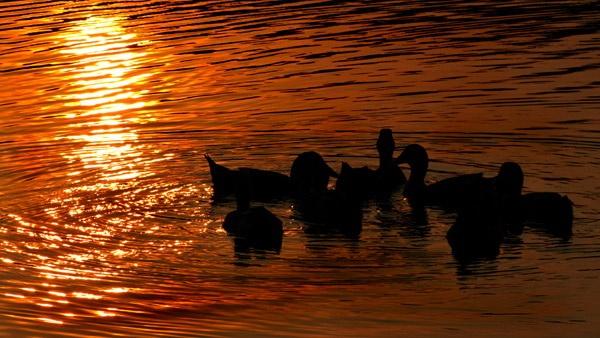 Sunrise at Sundarban, India by Saibal