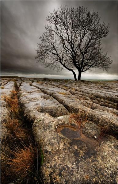 Malham Tree by iansnowdon
