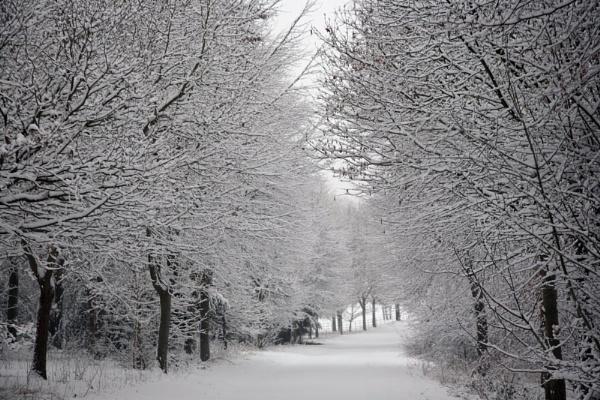 Snowy Avenue by Gaz111