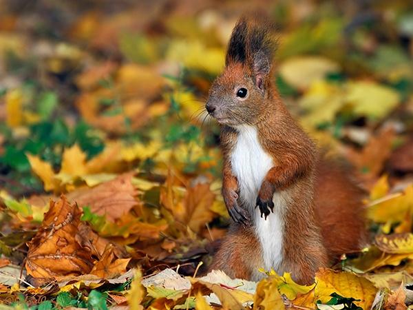 Squirrell in autumn by Gabicat