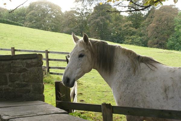 White horse by Gordonsimpson