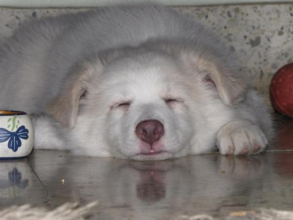 Kia-Sleeping by Chaitanya