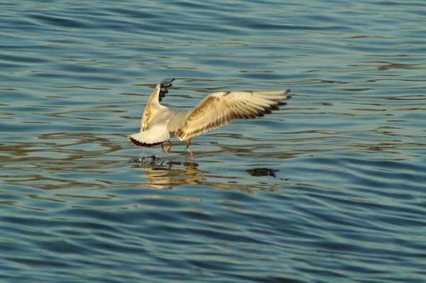 Bird 2 by saeidNL