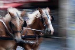 Figeac Horses
