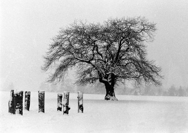 A cold, lonely tree. by Lontano