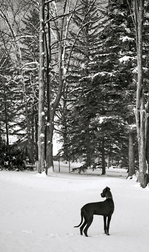 Snow Dog by jlwilliams1979