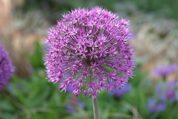 Pink flower by david hunt