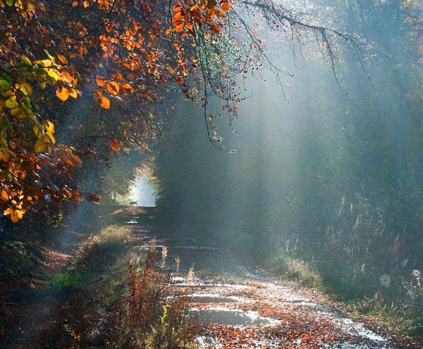 Woodland Rays by MalcolmM