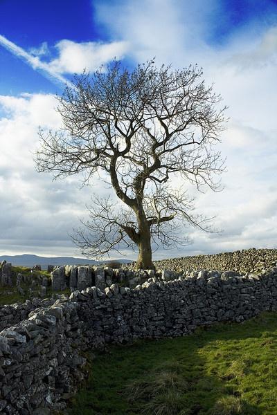 Lone Tree by Stonemushroom