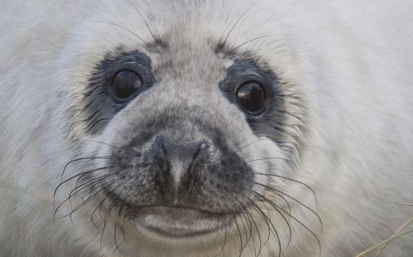 Seal 3 by sheepdogshady