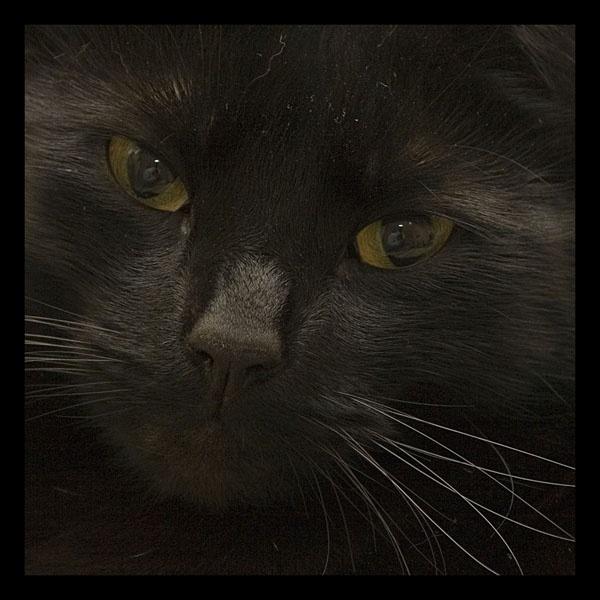 Salem by WOZZERHART
