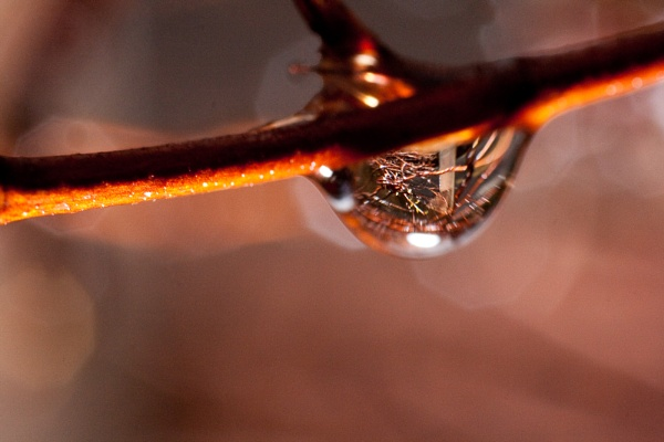 A reflected drop by Overread