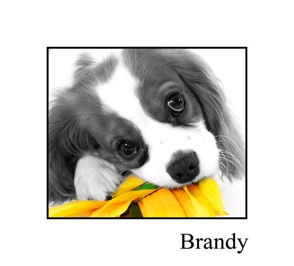 brandy by MNPHOTO