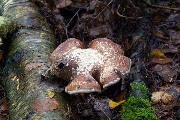 sodden fungi by HuntedDragon