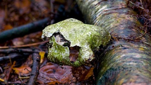 decaying by HuntedDragon
