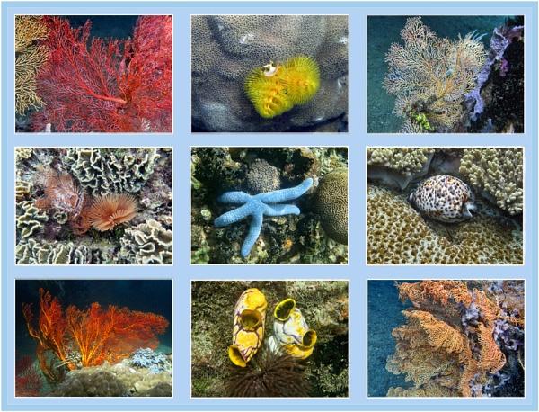 Underwater kaleidoscope by pennyspike