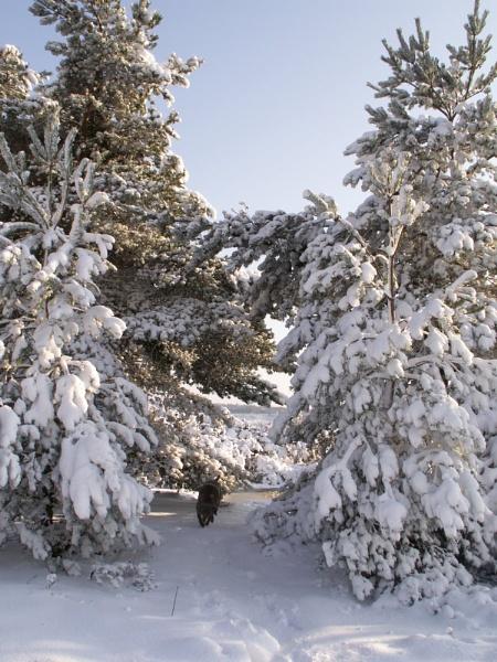 Snow & my Dog by paulmeyer