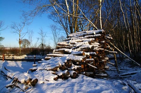 Norwegian wood? by pentaxian