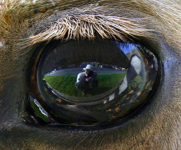 Through The Lense by emkayne