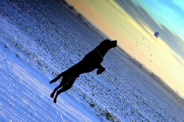 Snow ball catch by AJB_yeh