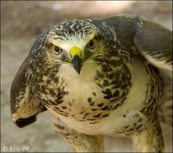 Big Eyes by looboss
