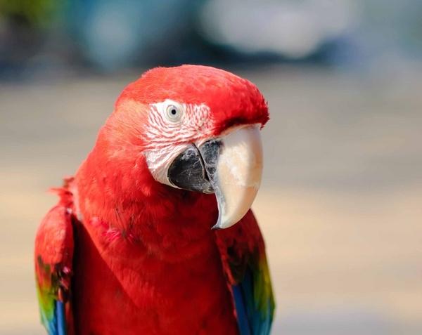 Polly got a cracker? by Ridefastcarveha