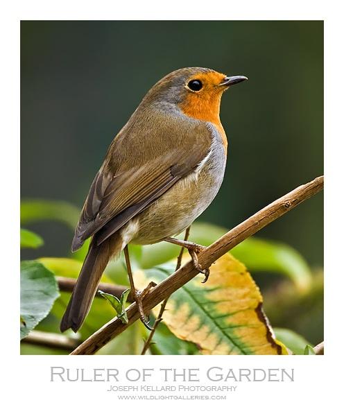 Ruler of the Garden by WildLight