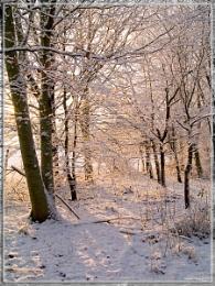 Winter Woodland Glow
