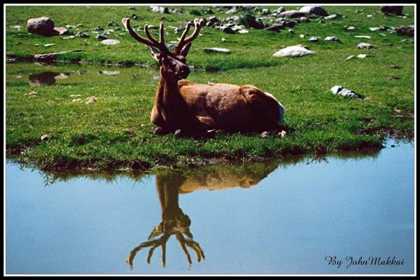 Resting  Deer by MAGS58